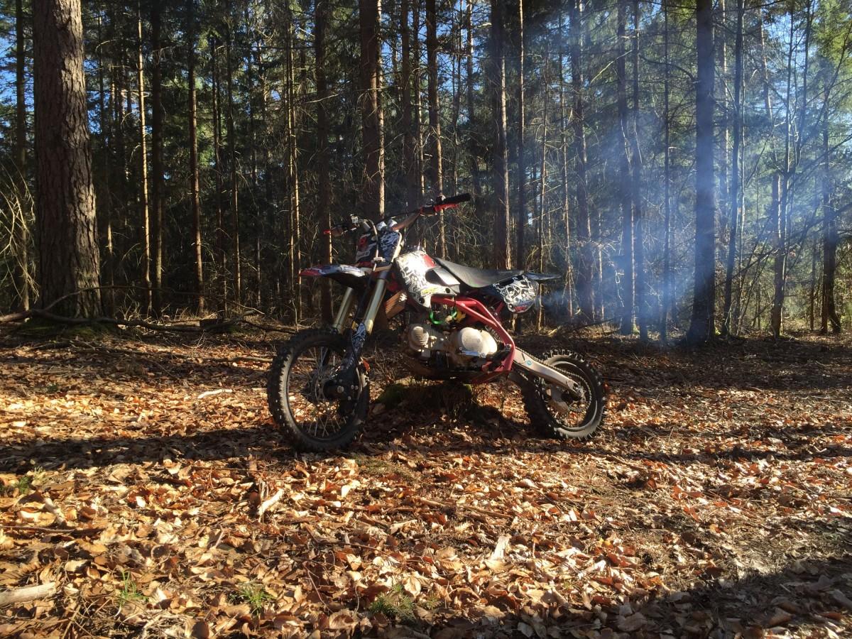 Pitbike im Wald